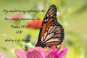 My comfort in my suffering is this: Your promise preserves my life.