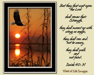 They will soar on wings like eagles
