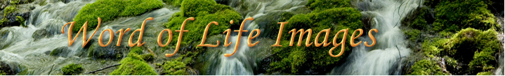 Word of Life Images Blog logo
